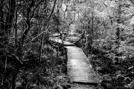 Through dense vegetation.