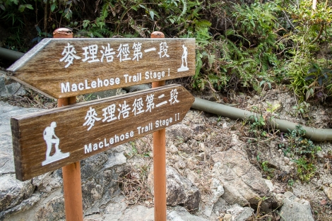 Onwards and upwards! Here scenic MacLehose Section 2 begins.