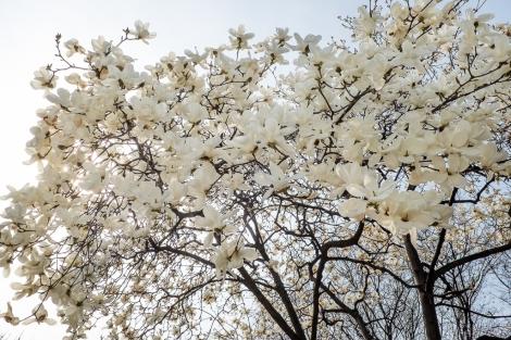 Trees in bloom everywhere.