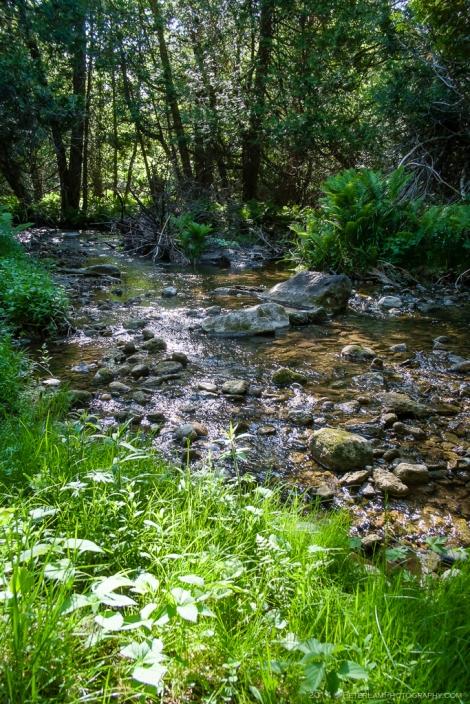 Boyne River Park