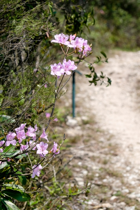 Plover Cove Country Trail